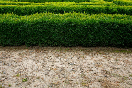green trimmed bush hedge in the park