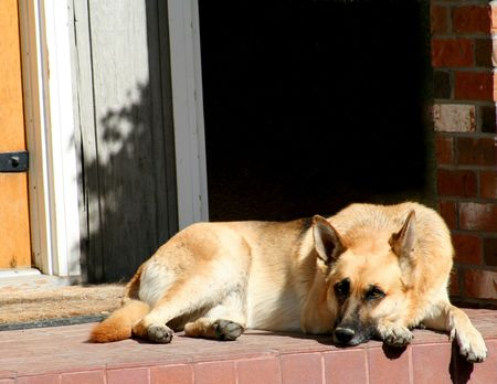 shephard: shephard tedesco a riposo