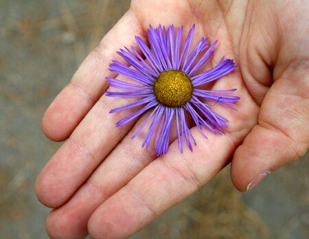 a boy holds a purple daisy