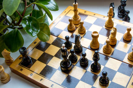 Wooden chess pieces on a chessboard, near the leaves of a green indoor flower, plant. Chess game. Situation on chessboard.