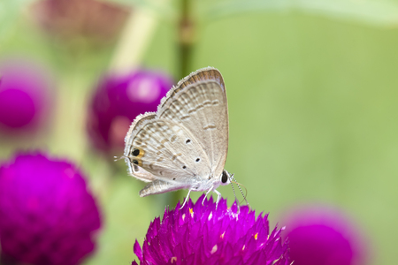 pink flower: Butterfly on yellow flower with grass. Stock Photo