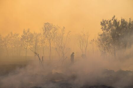 fireman: Smoke field and fireman after wildfire. Stock Photo