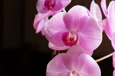 Beautiful orchids in Asia.