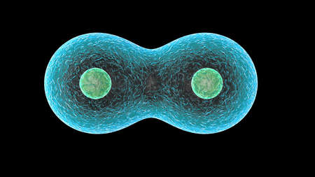3D rendering of cells, such as E. coli, red blood cells, DNA, neurons. Super high resolution, high pixel picture.