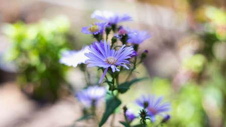 Beautiful bouquet Stock Photo