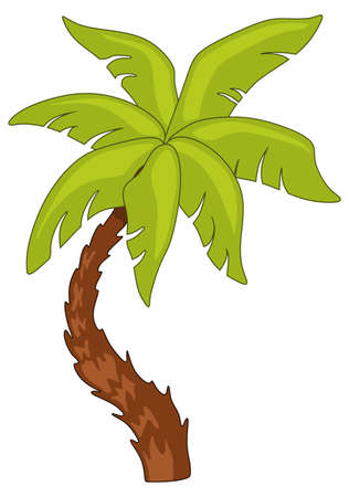 dates fruit: Palm tree with leaves on a white background