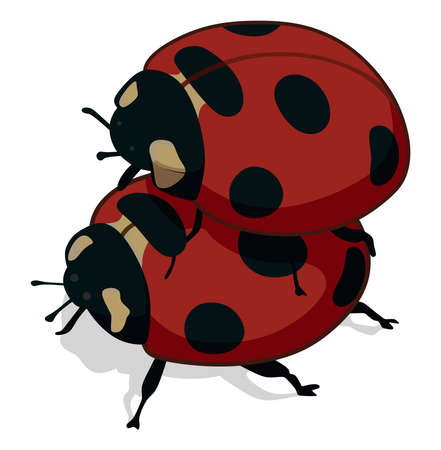 Ladybugs have on a white background Vettoriali