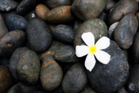 black stones: Blur Rock and flower Stock Photo