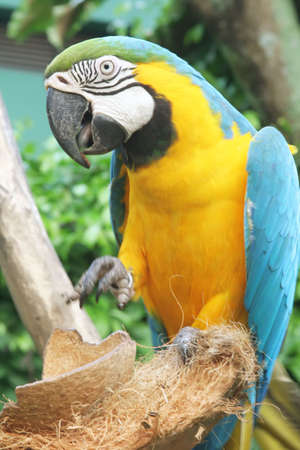 talons: parrot sticking out tongue with talons raised