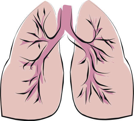 shape of good lung photo