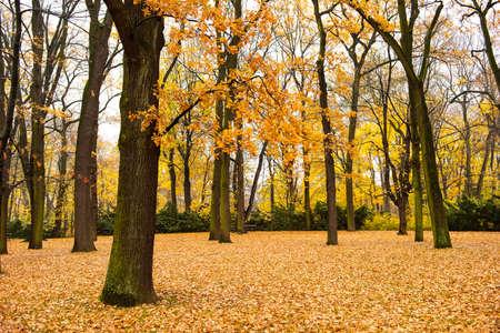 Autumn in Lazienki Park in Poland