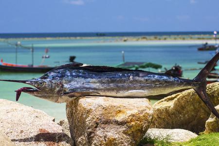 sportfishing: Sailfis dead on beach and blue sky
