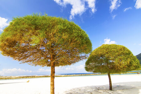 Pine trees and the Beach and blue sky photo
