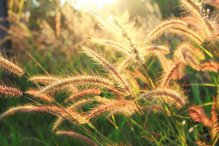 new day: flower grass background Sunrise A new day Stock Photo