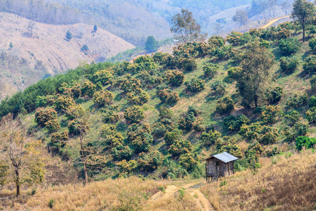 deforestacion: Ecología, el calentamiento global y la deforestación, los incendios forestales, sequías, el cambio de temporada bruma