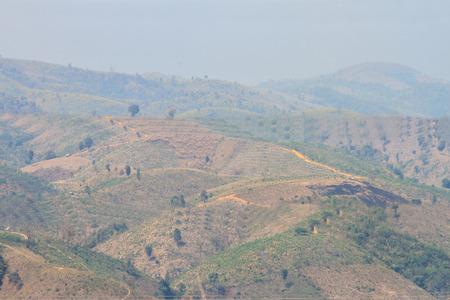 deforestacion: Ecolog�a, el calentamiento global y la deforestaci�n, los incendios forestales, sequ�as, el cambio de temporada bruma