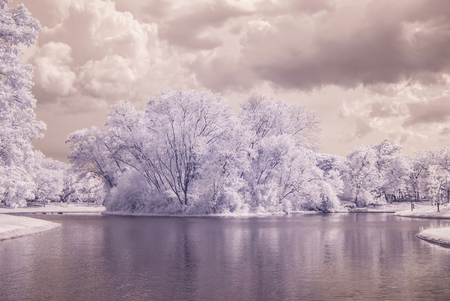 public park: infrared photo Trees and grass in Public park with pond