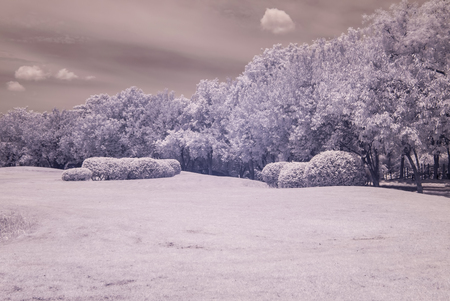 public park: infrared photo Trees and grass in Public park, bangkok, thailand