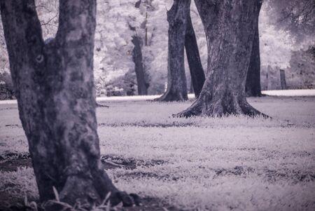 landscape garden: Infra-red photo Landscape garden tree and grass Stock Photo