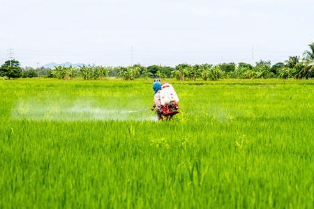 pesticides: Farmers pesticides in the fields Stock Photo