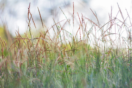 focus on background: blurred grass out of focus tropical green grass field abstract background
