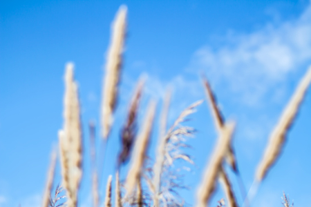 extreme close up: Flower blurred  and blue sky background, extreme close up with soft focus, beautiful nature details