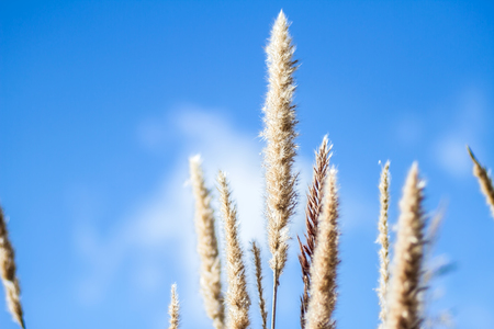 extreme close up: Flower and blue sky background blurred, extreme close up with soft focus, beautiful nature details