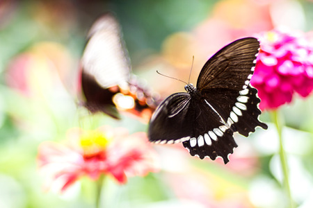 Beautiful butterfly with flower and blurred background Stock Photo