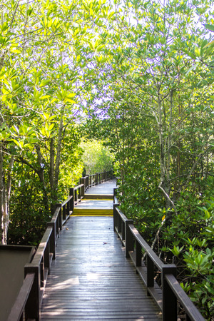 Mangrove nature trail with bridge wooden background Stock Photo