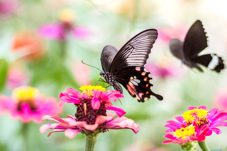 Beautiful butterfly with flower and blurred background Banco de Imagens