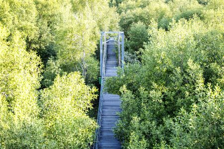 Wood bridge in green forest, Bang Pu Recreation Center, Samut Prakan Province, Thailand