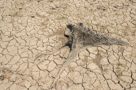 Global warming from the sun and burning, Heatwave hot sun, Climate change, Heatwave hot sun, Heat stroke Stockfoto