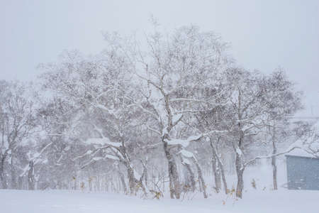 Beautiful winter and Snow in Sapporo, Hokkaido, Japan