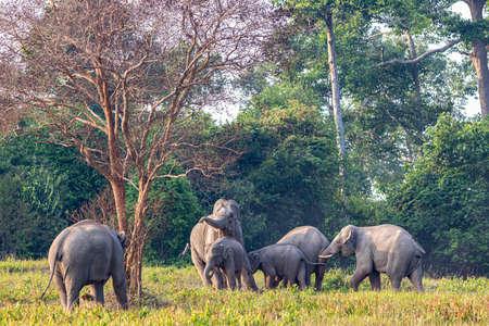 Elephant family in Khao Yai National Park, Thailand