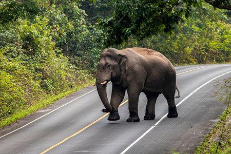 Elephant in Khao Yai National Park, Thailand Zdjęcie Seryjne