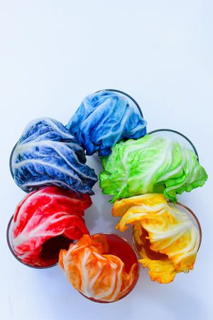 The Rainbow Vegetables , Lettuce rainbow magic