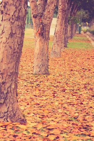 autumn,autumn leaves background