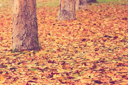 caoba: Otoño, hojas de otoño de fondo
