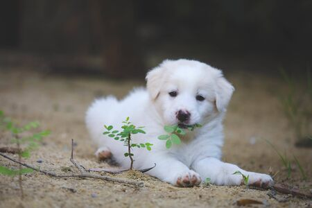 Cute dog , Dogs eat leaves, puppies sleep well.
