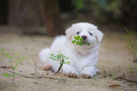 Cute dog , Dogs eat leaves, puppies sleep well. Stock fotó - 135462780