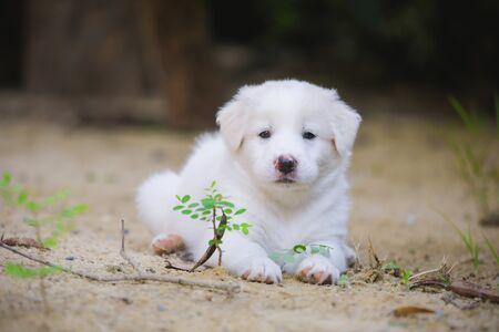 Cute dog , Dogs eat leaves, puppies sleep well. Stock fotó - 135462784