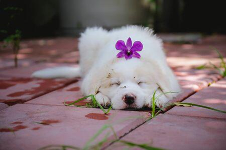 Cute dog , Dogs eat leaves, puppies sleep well. Stock fotó - 135462785