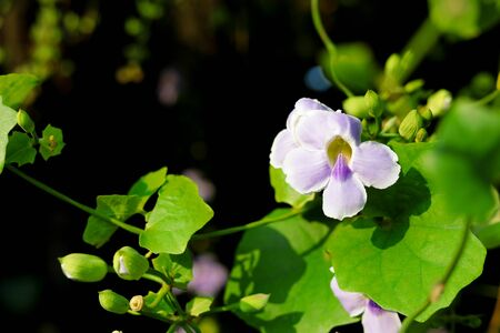 Beautiful purple flowers in the tropics
