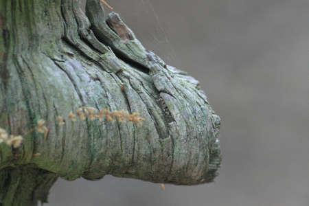 burl wood: A weathered wood burl.