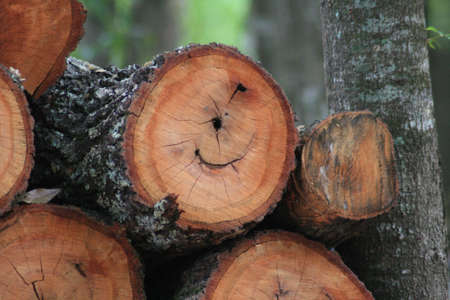 outdoor fireplace: Logs on Woodpile