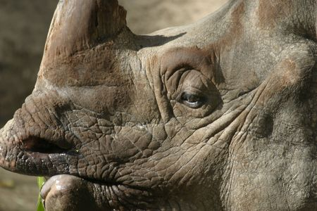 Rhinocerous