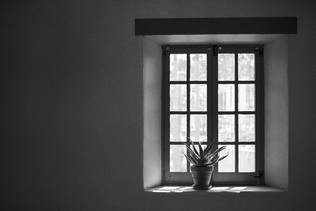 Window with Plant in Black and White Stock fotó