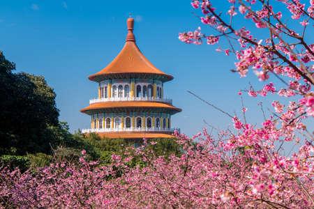 Sakura cherry blossom at Tianyuan temple, Taipei, Taiwan
