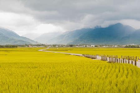 La vista horizontal de hermosos campos de arroz en Brown Avenue, Chishang, Taitung, Taiwán. Foto de archivo