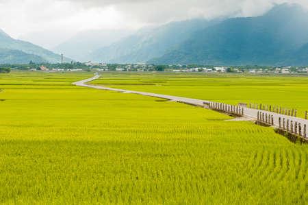 Landscape View Of Beautiful Rice Fields At Brown Avenue, Chishang, Taitung, Taiwan. Foto de archivo